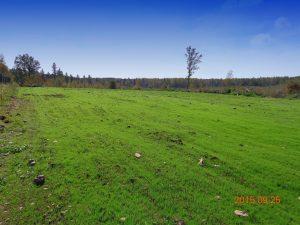 Elk Habitat Improvements in Flambeau River State Forest